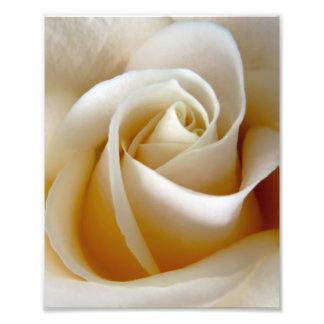 Cream Rose Wedding Photo