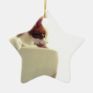 Creamy Cat Ceramic Star Decoration