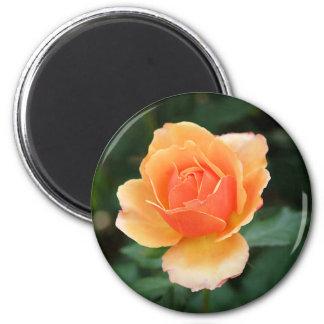 Creamy Orange Modern Rose 6 Cm Round Magnet