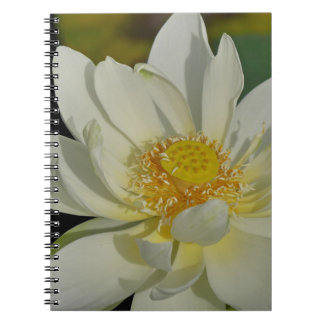 Creamy Water Lily.JPG Notebook