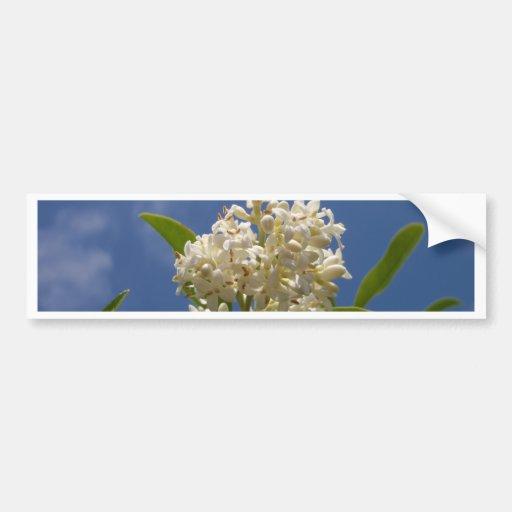 Creamy White Blossom Bumper Stickers