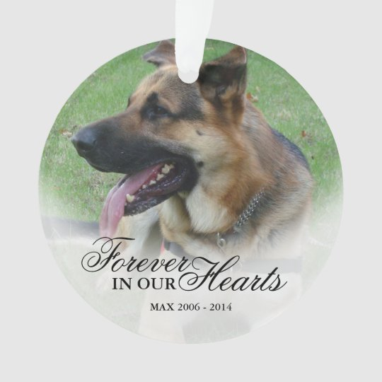 Create a Name and Photo Pet or Person
