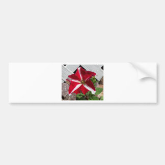 Create Your Own Custom Design! Bumper Sticker