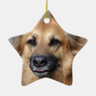 Create your own pet photo christmas ornament