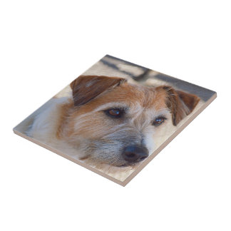 Create your own square tile - cute dog