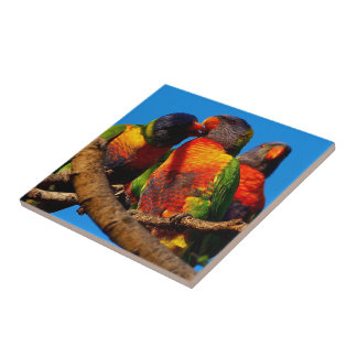 Create your own square tile - Rainbow Lorikeet