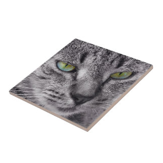 Create your own square tile - tabby cat