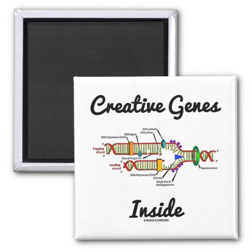 Creative Genes Inside (DNA Replication) Magnets