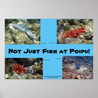 Creatures at Poipu Beach Poster