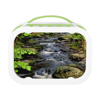 Creek flows through forest lunch box