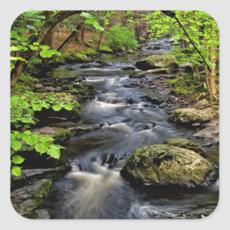 Creek flows through forest square sticker