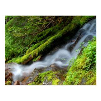 Creek in Mt. Rainier National Park Postcard