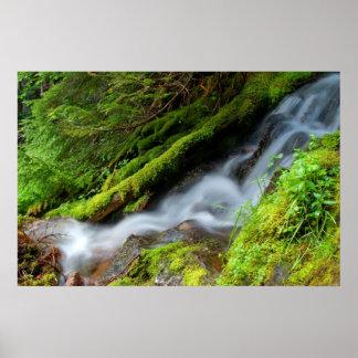 Creek in Mt. Rainier National Park Poster