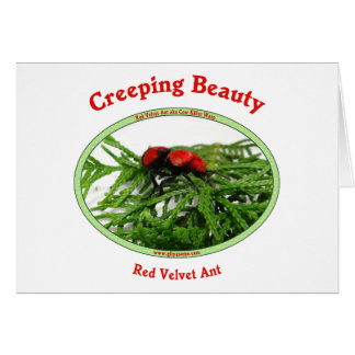 Creeping Beauty Red Velvet Ant Bug Stationery Note Card