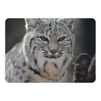 Creeping Bobcat 13 Cm X 18 Cm Invitation Card