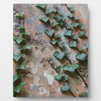 Creeping Ivy Plaque