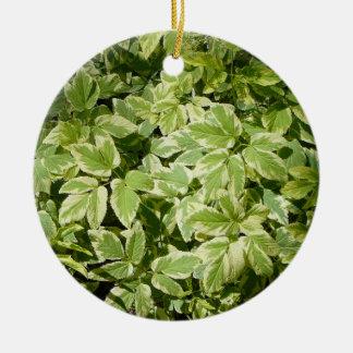 Creeping Vine Ornament