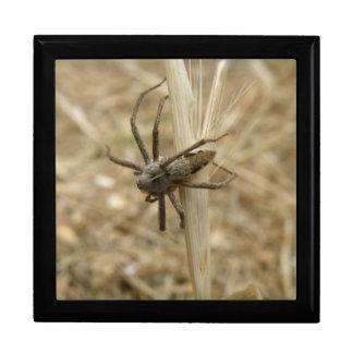 Creepy Crawly Spider Gift Box
