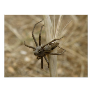 Creepy Crawly Spider Print