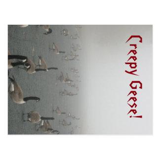 Creepy Geese Postcard