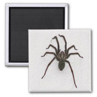 Creepy Spider Refrigerator Magnet