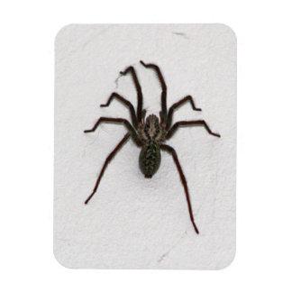 Creepy Spider Vinyl Magnets