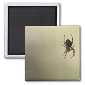 Creepy Spider Square Magnet