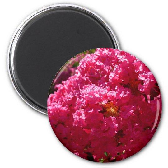 Crepe Myrtle Tree Magenta Flowers Magnet