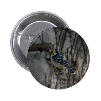 Crested Barbet bird 6 Cm Round Badge