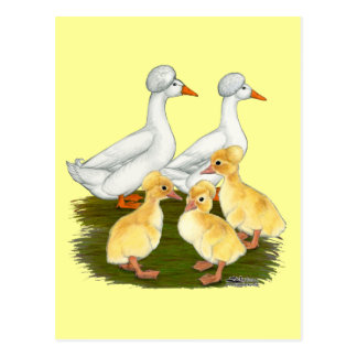 Crested Duck Family Postcard