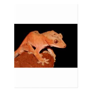 crested gecko postcard