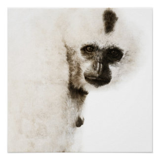 Crested Gibbon #1