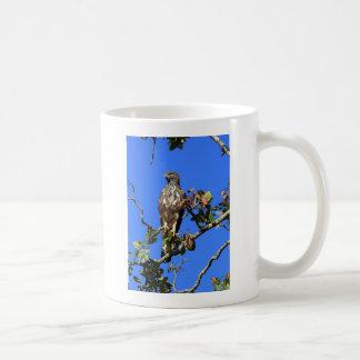 Crested Hawk Eagle in Sri Lanka Coffee Mug