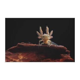 Crested newt larve canvas print