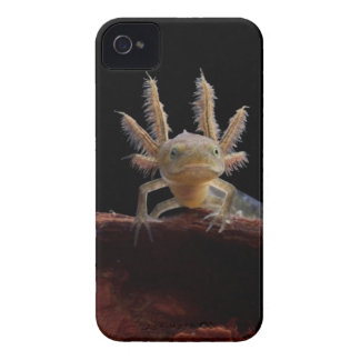 Crested newt larve iPhone 4 case