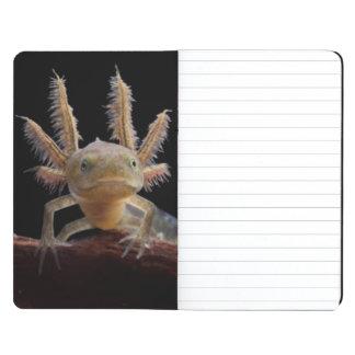 Crested newt larve journal