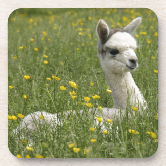 Cria In Buttercups Beverage Coasters