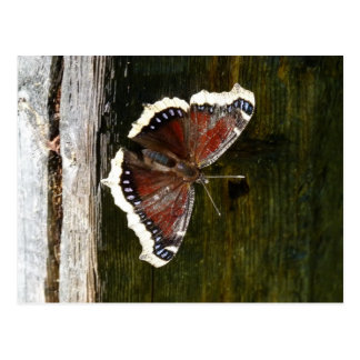 Crimson and White Butterfly Postcard