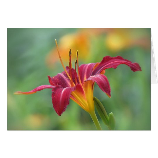 Crimson Lily - Daylily Card