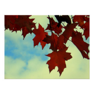 Crimson Maple Poster