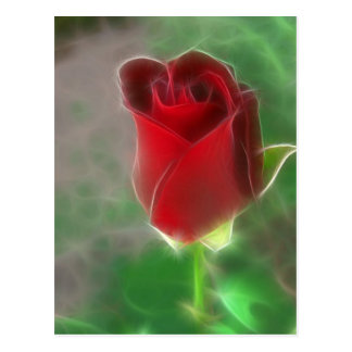Crimson Red Rose Angelic Postcard