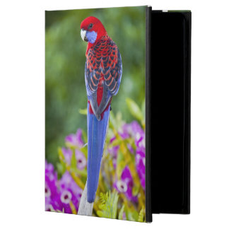 Crimson Rosella & backdrop of orchids Lamington Case For iPad Air