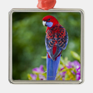 Crimson Rosella & backdrop of orchids Lamington Christmas Ornament