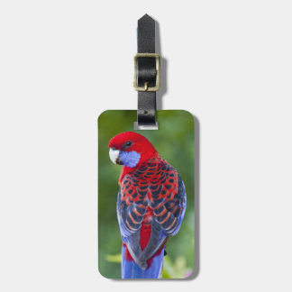 Crimson Rosella & backdrop of orchids Lamington Luggage Tag