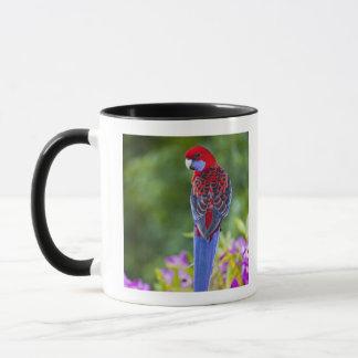Crimson Rosella & backdrop of orchids Lamington Mug