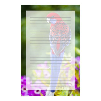 Crimson Rosella & backdrop of orchids Lamington Stationery