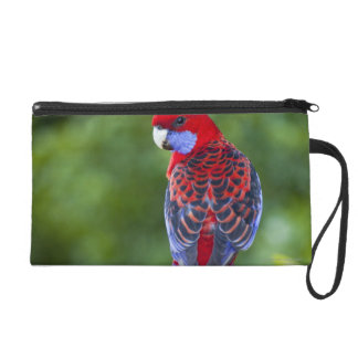 Crimson Rosella & backdrop of orchids Lamington Wristlet