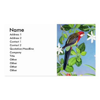 crimson rosella pack of standard business cards