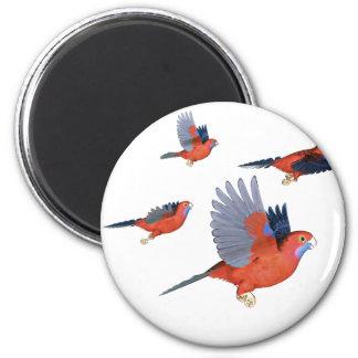 Crimson Rosella Parrot Flock 6 Cm Round Magnet