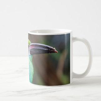 Crimson-rumped Toucanet Basic White Mug